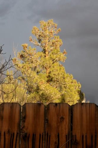 treeandfence