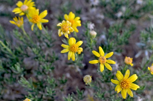 yellowwildflowers2